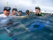 Snorkeling at the Marine World pontoon