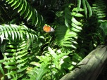 Butterfly house, Kuranda